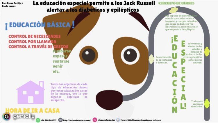 En la imagen se puede apreciar un perro entre las dos educaciones que tiene que seguir: la básica, común al resto de perros; y la especial, en la que predomina el circuito de olores para los perros de alerta.